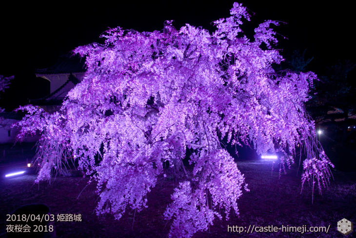 cherry-blossoms-night2018_1st_08