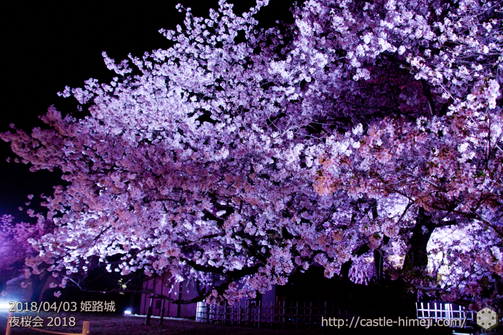 cherry-blossoms-night2018_1st_09