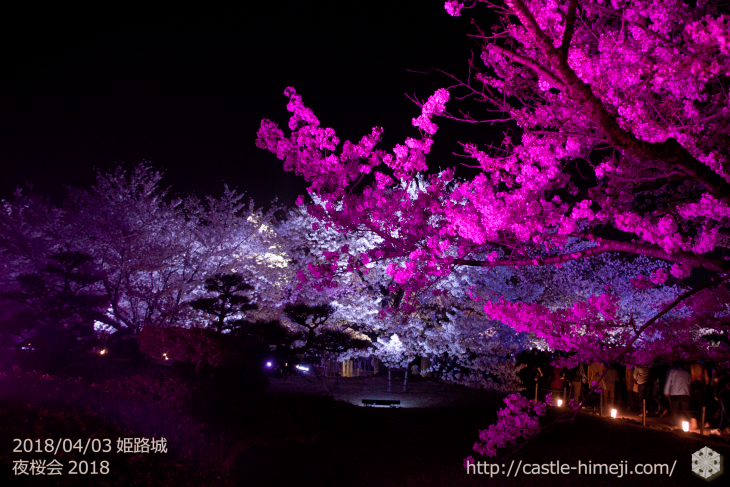 cherry-blossoms-night2018_1st_11