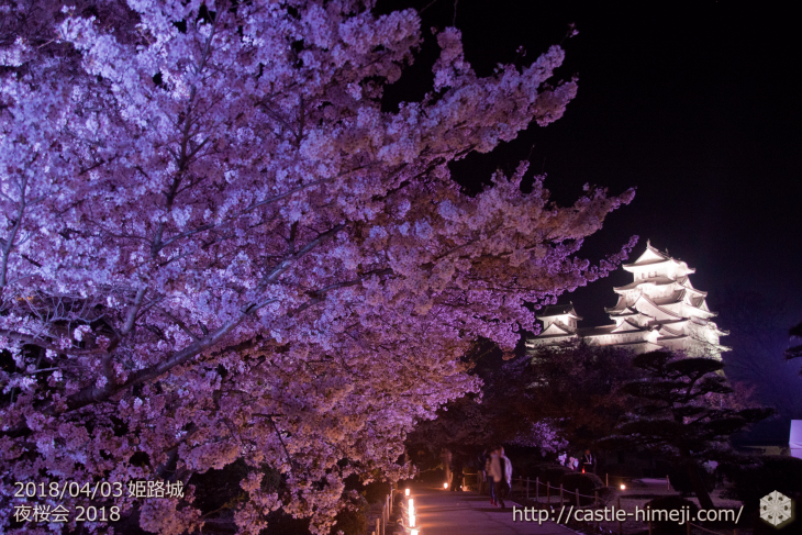 cherry-blossoms-night2018_1st_12