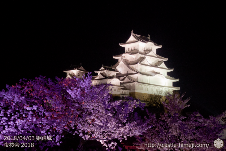 cherry-blossoms-night2018_1st_13