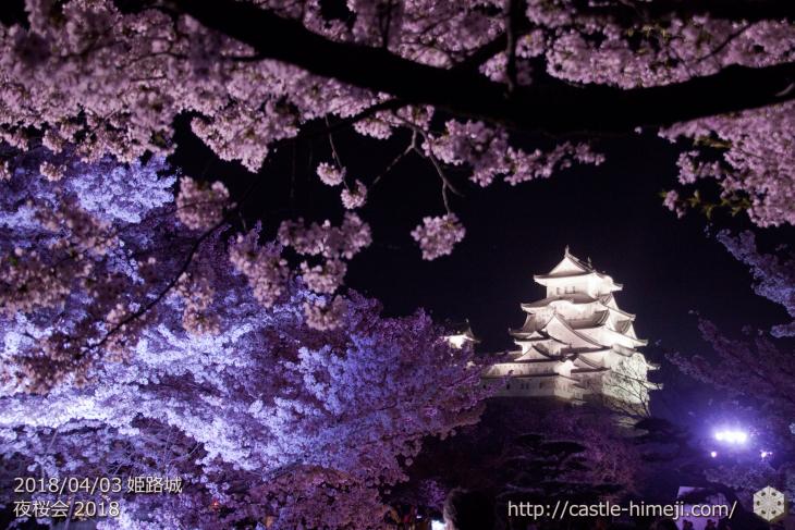 cherry-blossoms-night2018_1st_15