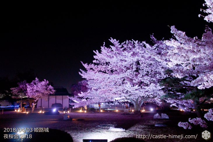 cherry-blossoms-night2018_1st_16