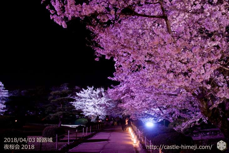 cherry-blossoms-night2018_1st_17