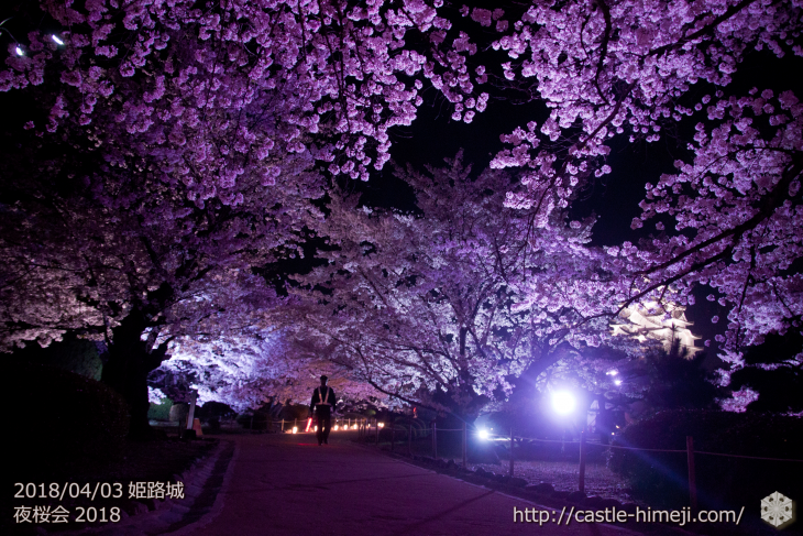 cherry-blossoms-night2018_1st_18