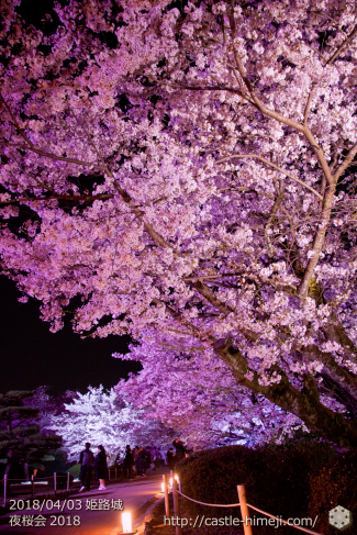 cherry-blossoms-night2018_1st_19