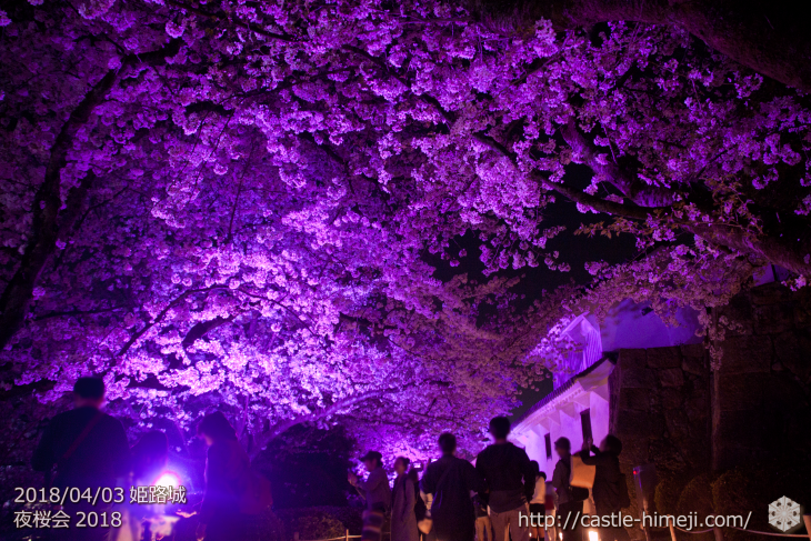 cherry-blossoms-night2018_1st_20