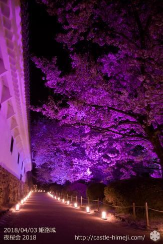 cherry-blossoms-night2018_1st_21