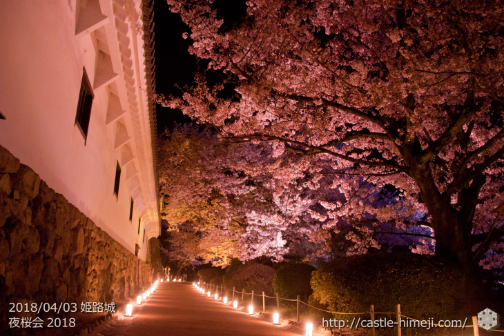 cherry-blossoms-night2018_1st_22