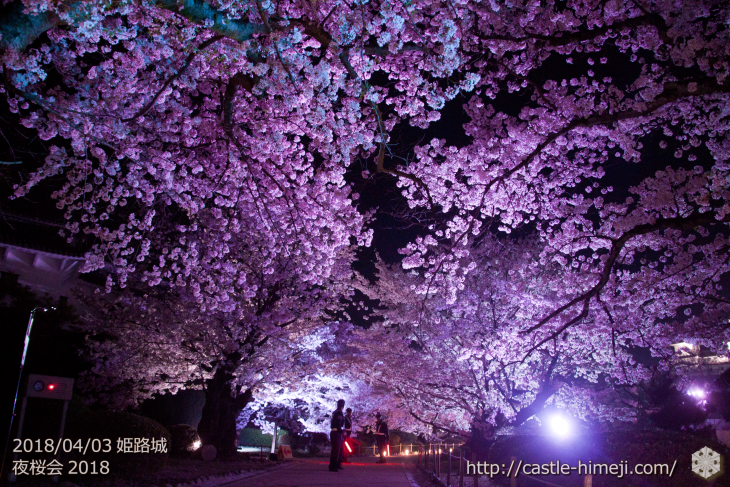 cherry-blossoms-night2018_1st_23