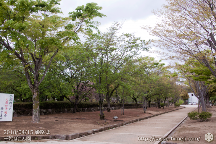cherry-blossoms20180415_04