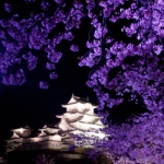 eye_cherry-blossoms-night2018_1st