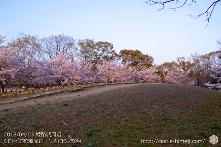 slow-cherry-blossoms20180330_06