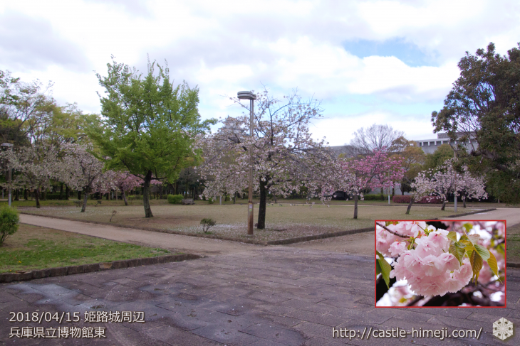 slow-cherry-blossoms20180415_11