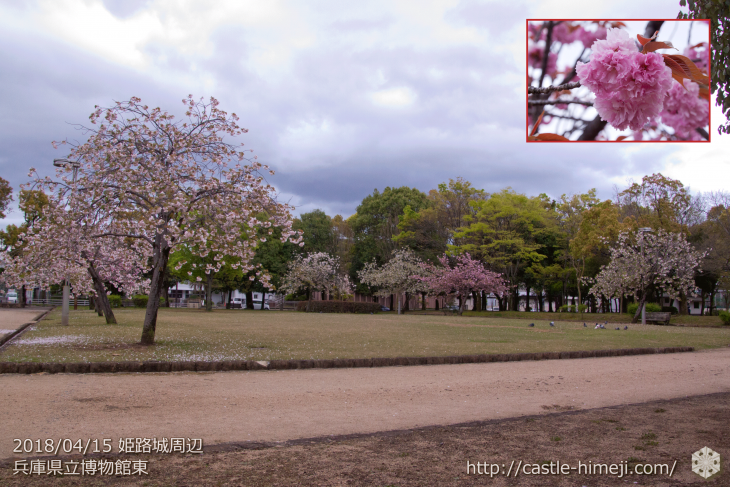 slow-cherry-blossoms20180415_12