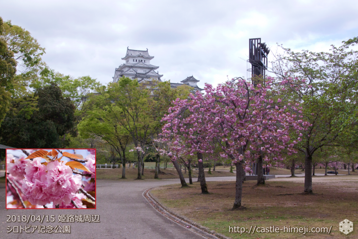 slow-cherry-blossoms20180415_13