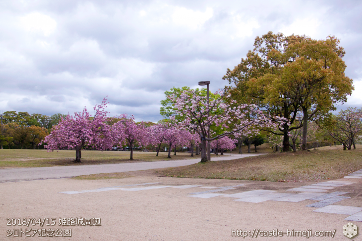 slow-cherry-blossoms20180415_16