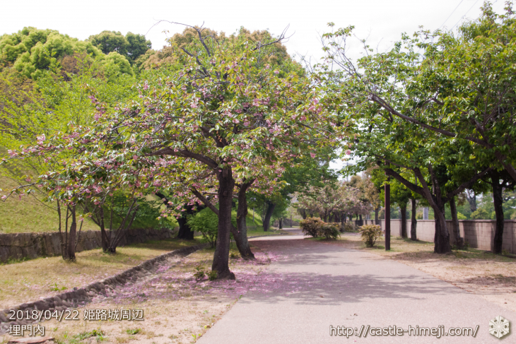 slow-cherry-blossoms20180422_04