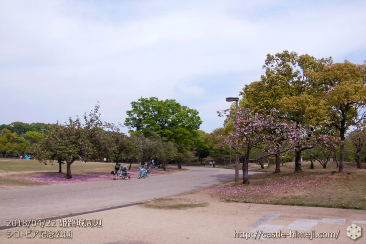 slow-cherry-blossoms20180422_11