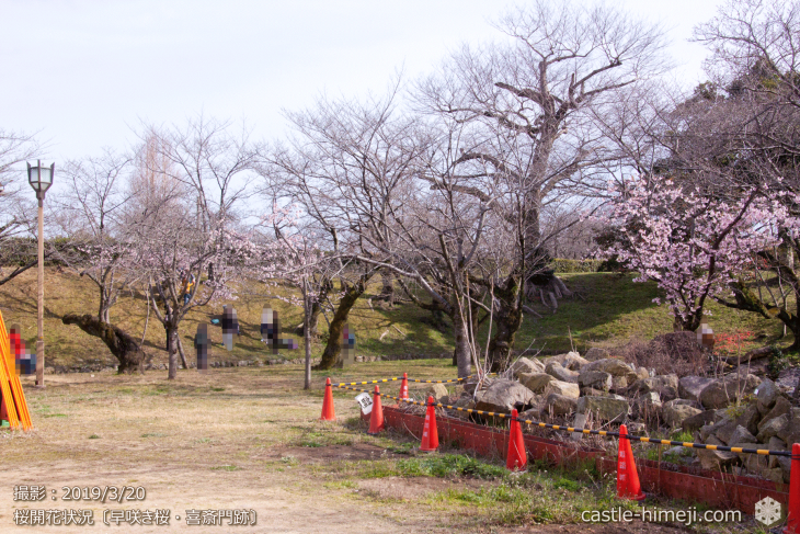 cherry-blossoms20190320_out_03