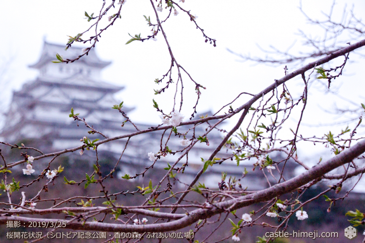cherry-blossoms20190325_out2_02