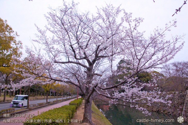 cherry-blossoms20190325_out2_06