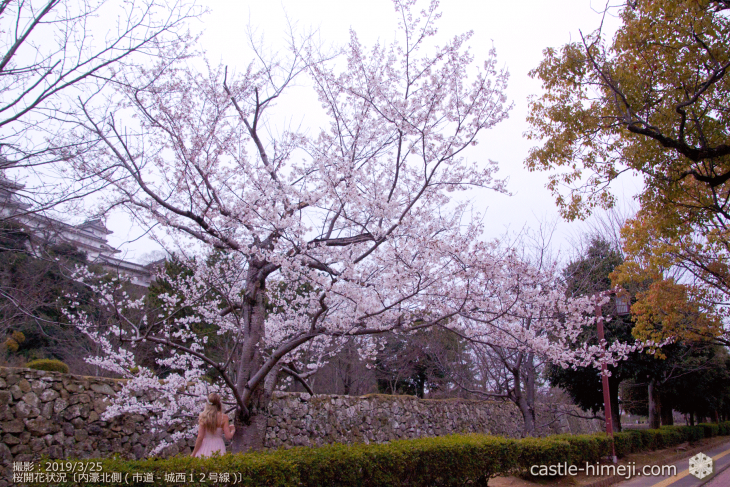 cherry-blossoms20190325_out2_08