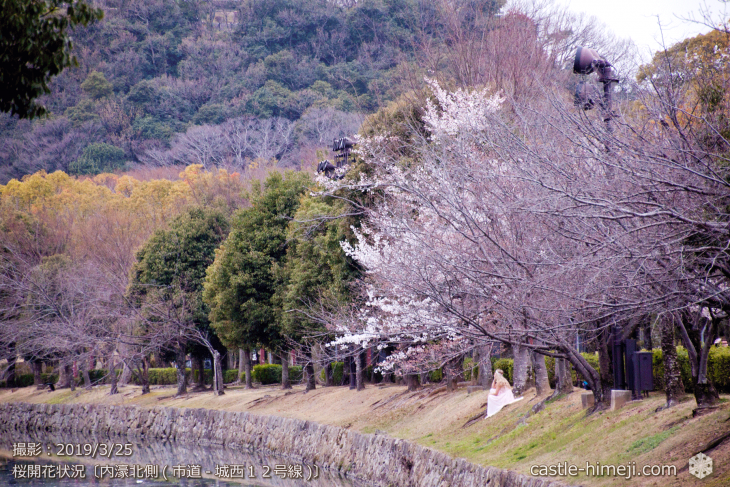 cherry-blossoms20190325_out2_12