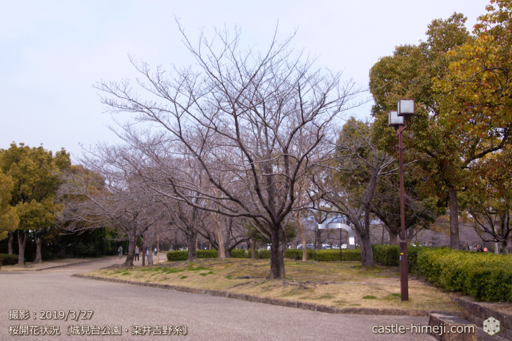 cherry-blossoms20190327_out1_14