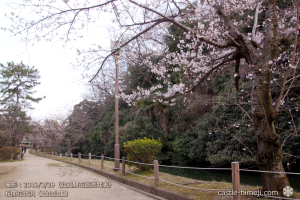 cherry-blossoms20190329_out2_08
