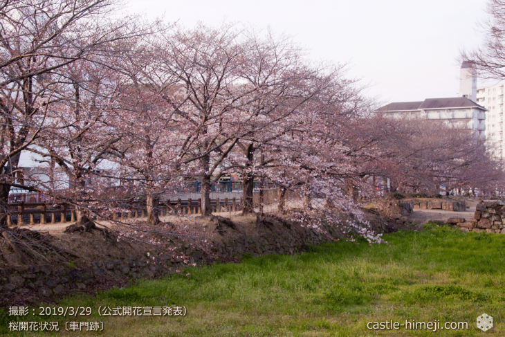cherry-blossoms20190329_out2_15