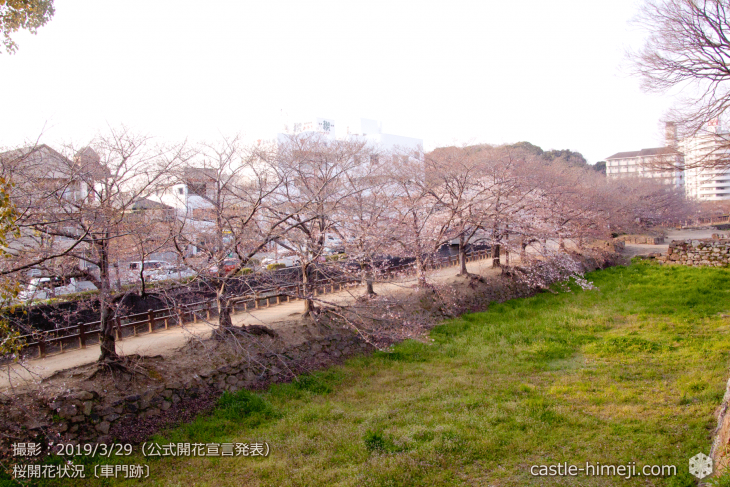 cherry-blossoms20190329_out2_16