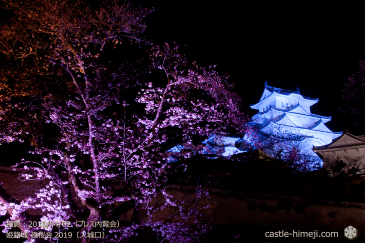 cherry-blossoms-night_0st_03