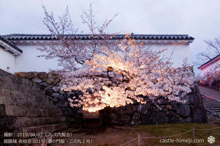 cherry-blossoms-night_0st_06