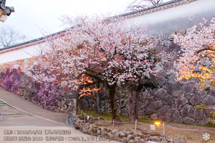 cherry-blossoms-night_0st_07