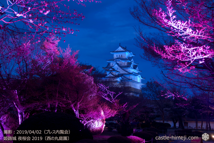 cherry-blossoms-night_0st_08