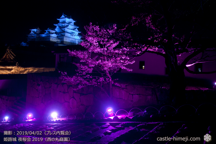 cherry-blossoms-night_0st_09