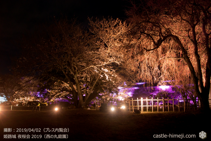 cherry-blossoms-night_0st_10
