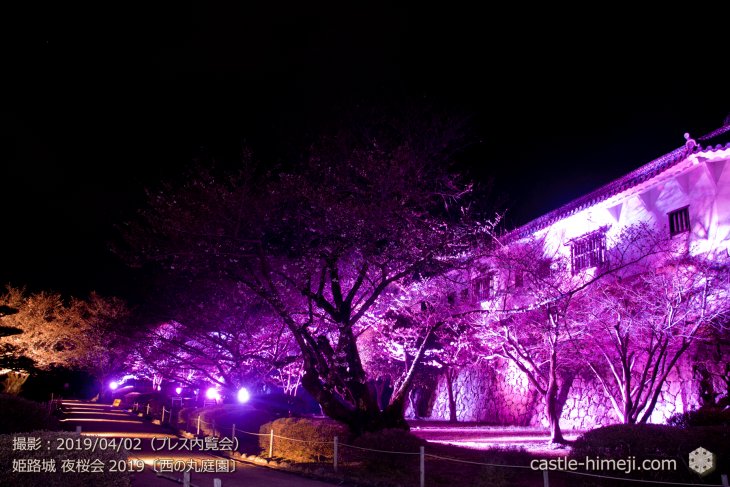 cherry-blossoms-night_0st_12
