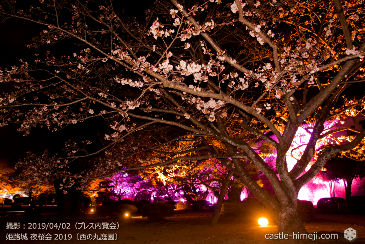 cherry-blossoms-night_0st_13