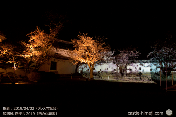cherry-blossoms-night_0st_14