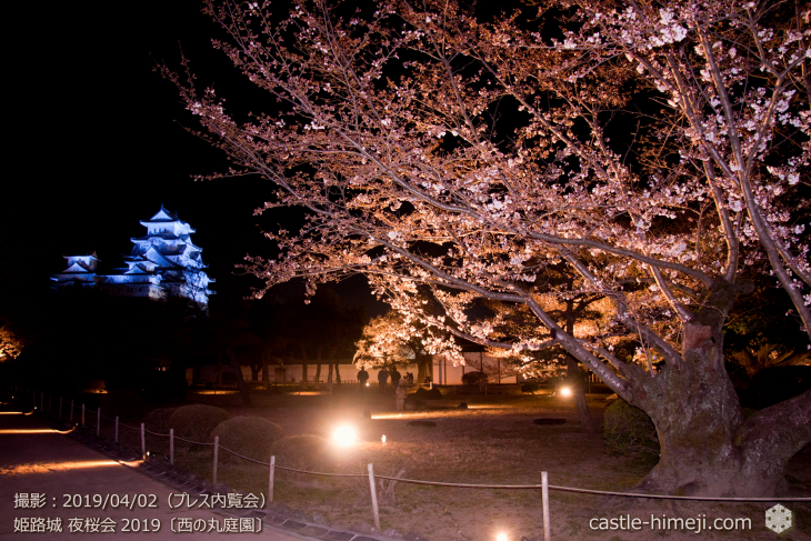 cherry-blossoms-night_0st_18