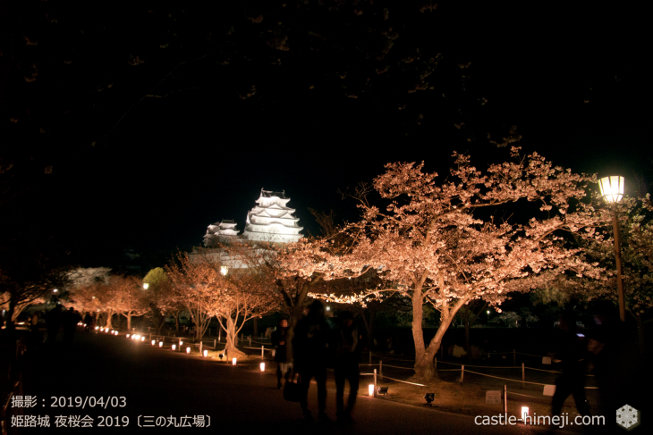 cherry-blossoms-night_1st_03