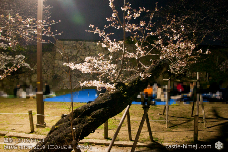 cherry-blossoms-night_1st_04