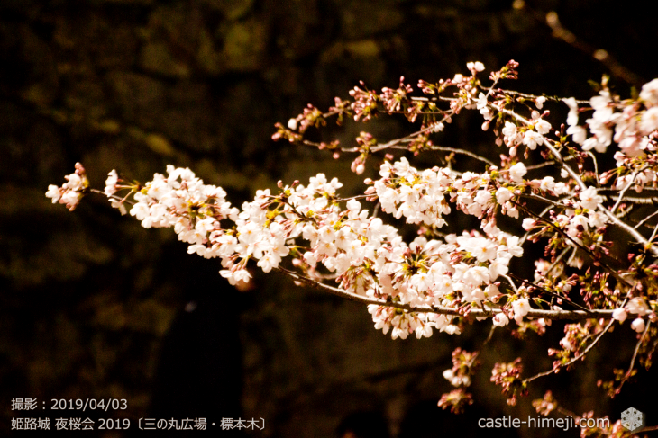 cherry-blossoms-night_1st_05