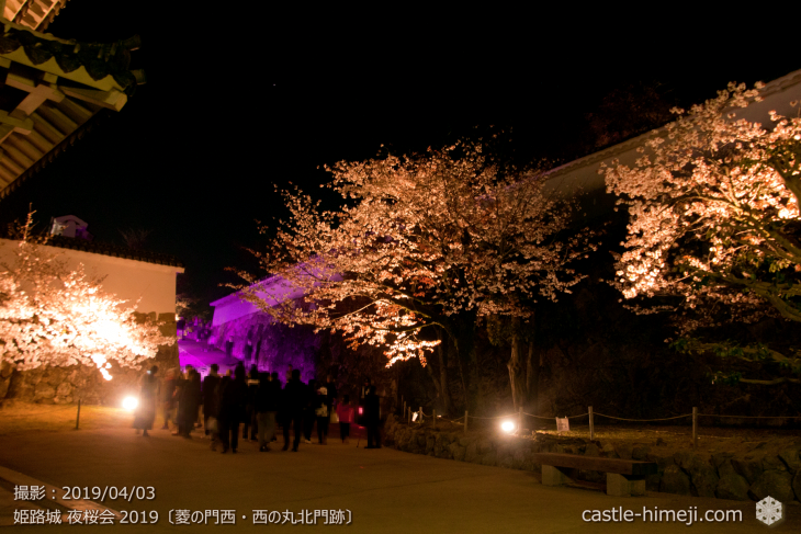 cherry-blossoms-night_1st_07
