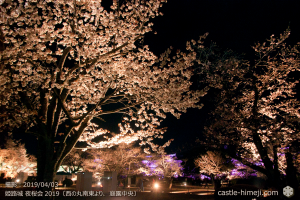 cherry-blossoms-night_1st_09