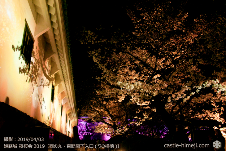 cherry-blossoms-night_1st_10