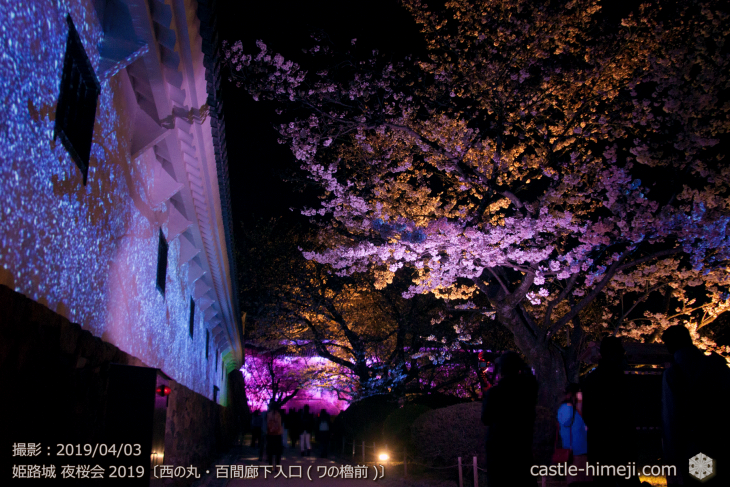 cherry-blossoms-night_1st_11