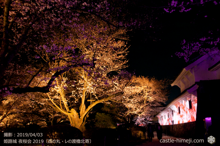 cherry-blossoms-night_1st_15